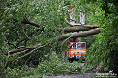 Umgestürzter Baum Rambach 31.05.13