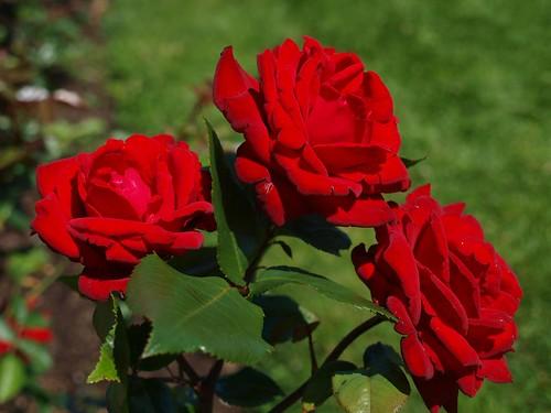 E3_20130728_130309_0632_v01..Crimson Bouquet
