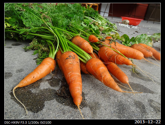 20131222_carrot