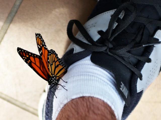 Butterfly on My Sock