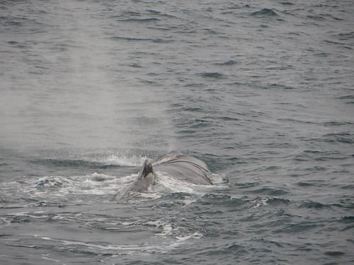 whale fin