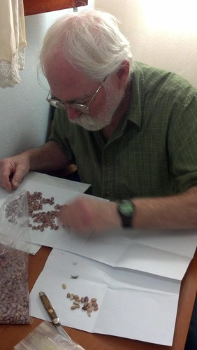 sorting bean seed