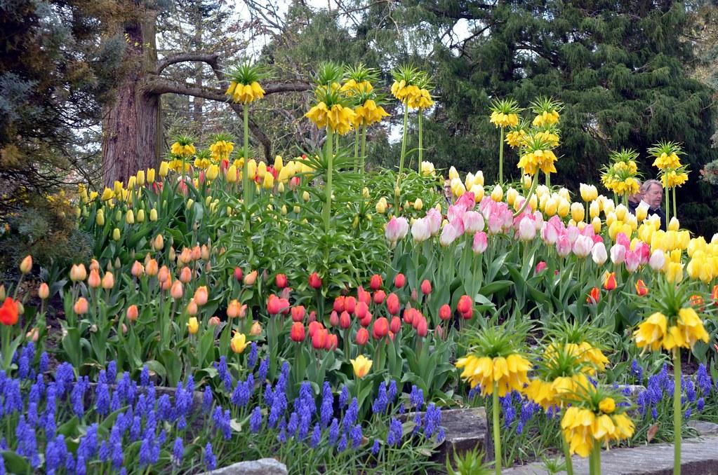 konstanz flower-bed