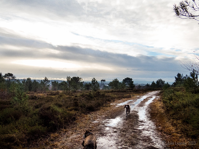 A bit wet and muddy on Canford Heath