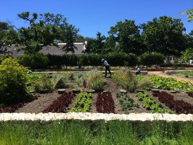 Babel@Babylonstoren - Veggie Garden