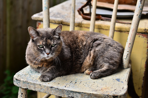 What's New Pussycat by jumpinjimmyjava