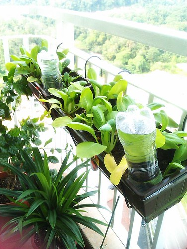 Veg planter Box 1 and 2