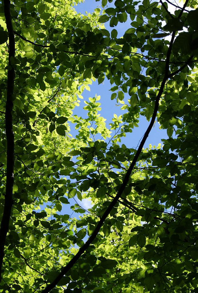 Forêt au dessus de Yenne