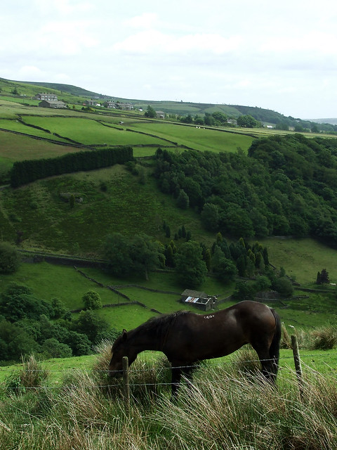 landscape with grazing horse