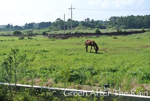 Arumdaum Resort Jeju Back Horses