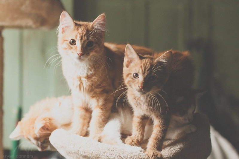 Ginger invasion!