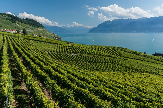 Vineyards, Lavaux, Switzerland