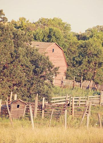 August 20, 2013. Barn
