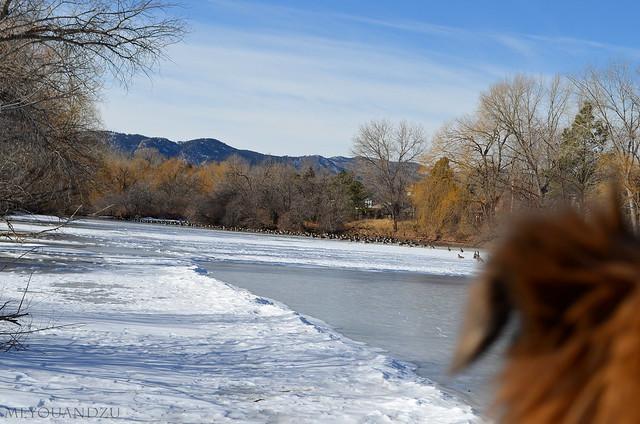 Gazing at geese
