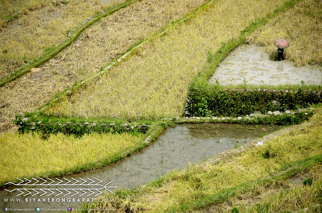 Farmer in Batad