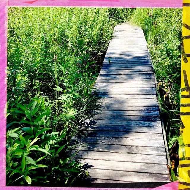 Plank Bridge - Bluff Creek Fen