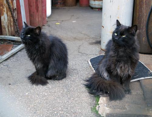 welderscat-sistersC09394