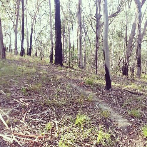 A path through the bush by andrewgillsag
