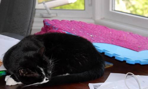 Good kitty and blocking shawl