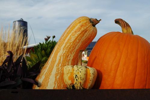 Fall at the Farm by Brian Williamsen