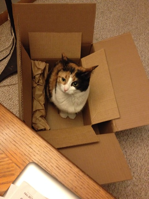 cat in a double-box #project365