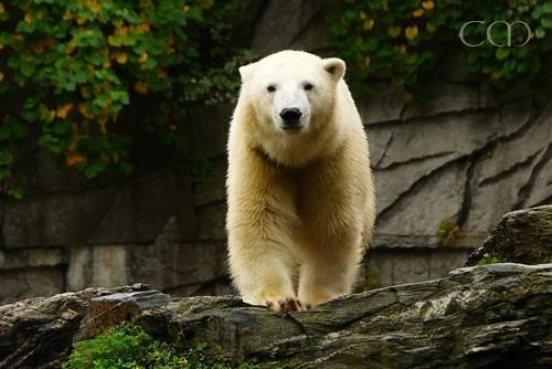 CUTE bear...:)