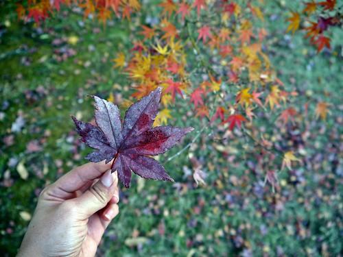 autumn in Tokyo