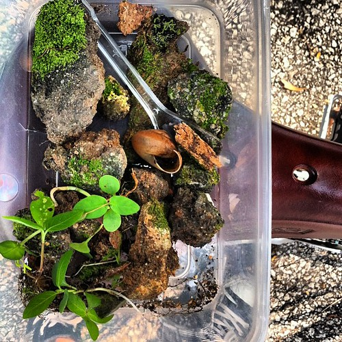 "Rescue #terrarium no. 4 ""Elias"" in progress. The excavators are already at work. We barely got these fellas out in time."