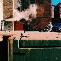 Pigeon #VSCOCam