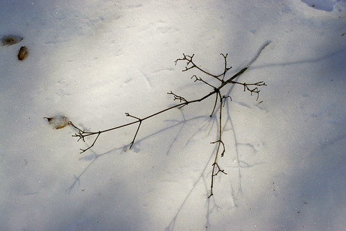 twig on snow