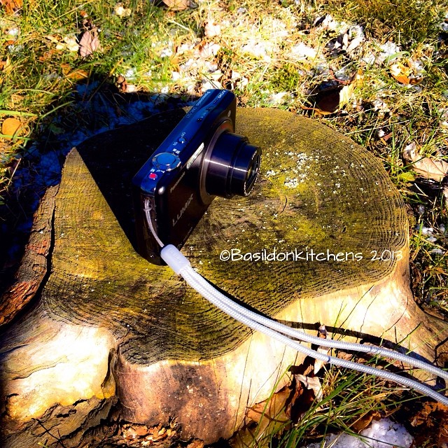 Nov 24 - outdoor toy {this is mine; my camera} #photoaday #toy #camera #outdoors #treestump