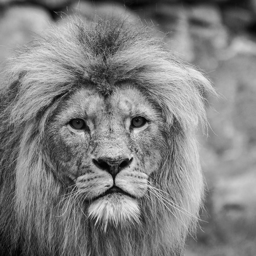 Week 26/52 - The King by Flubie