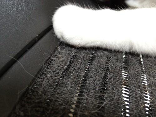 Aeron Chair & cat