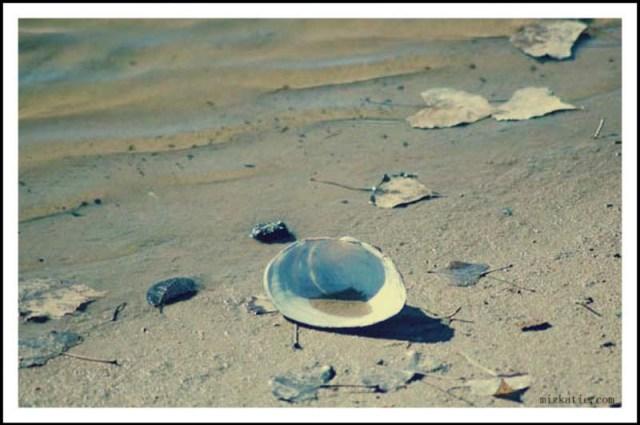 mizkatie seashell by the seashore