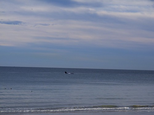 Southern Right Whale playing by El Doradillo