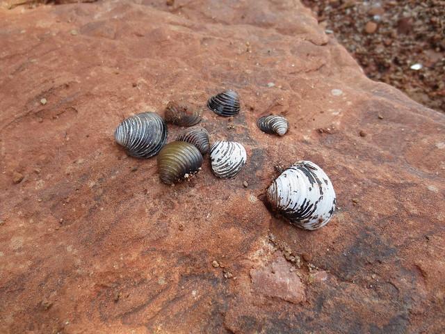 Oklahoma seashells!