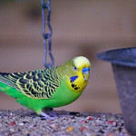 A bright looking bird_