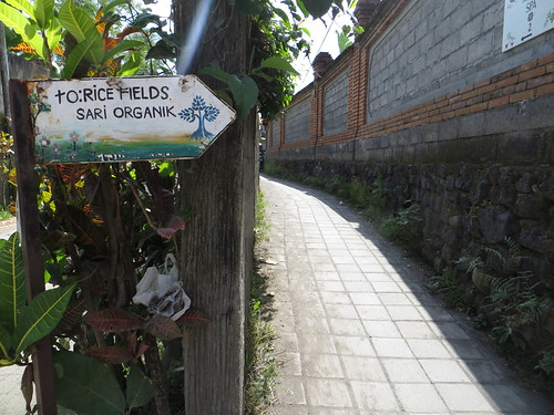 rice fields this way