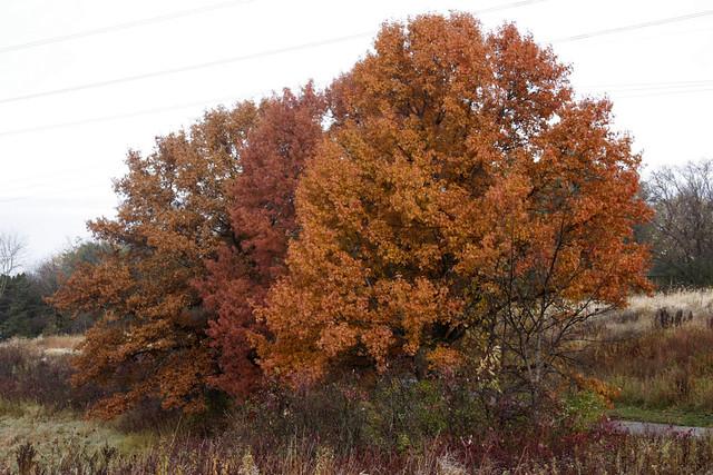 oaks at Thomas Lake Park