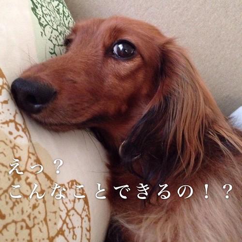 モブログ個別相談_おどろき