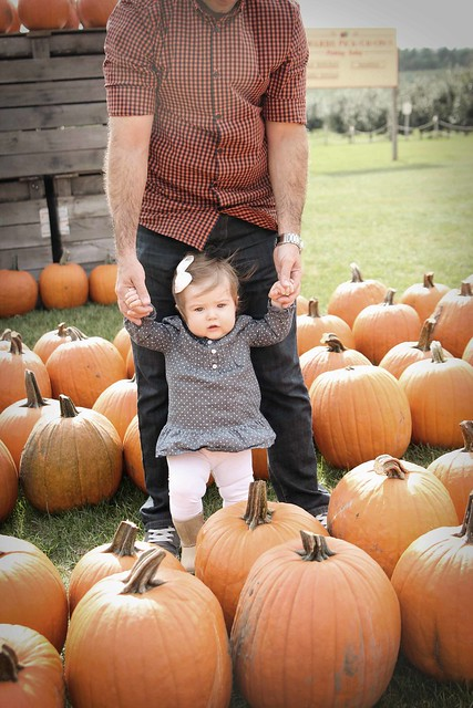 Pumpkin patch 2013