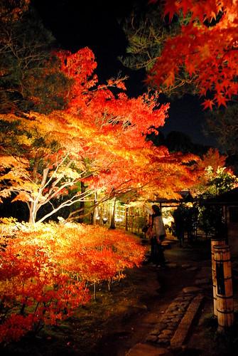 Shirotori Fall Lightup 012r