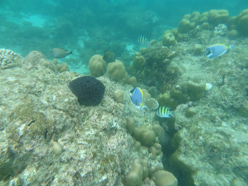 Reethi Rah House Reef underwater snorkeling photo