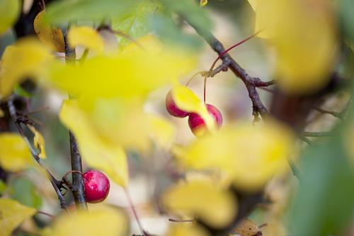 di verdi, gialli e rossi audaci