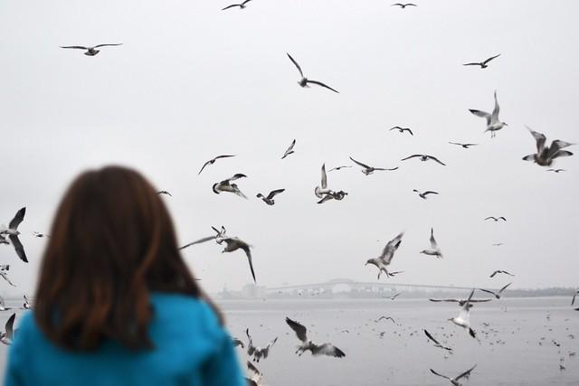 All the Birds! 2