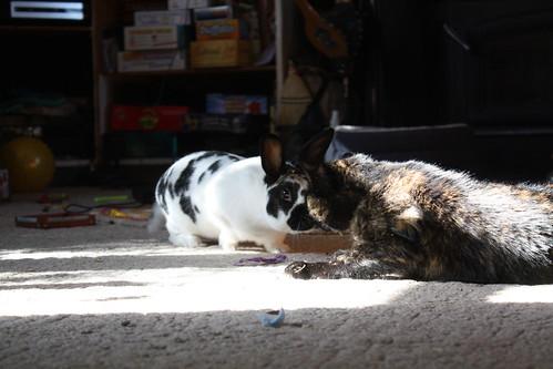 Gordon and Liesl