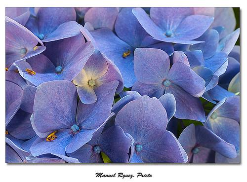 Flores 0807/2013