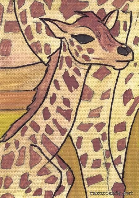 Rothchilds giraffe (1)