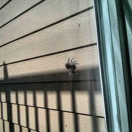 Anybody know what kind of spider this is? It greeted me at my south window today.