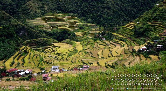 Ampitheater shaped rice terraces batad ifugao